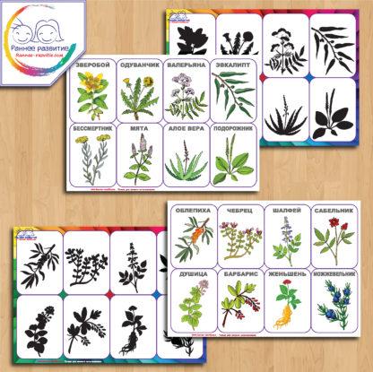 Теневое лото «Лекарственные растения»