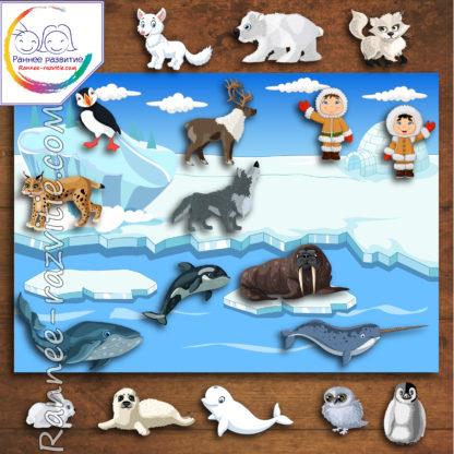 Игра на липучках, аппликация «Животные холодных широт»