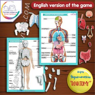 Дидактическая игра «Аnatomy» (English version of the game)