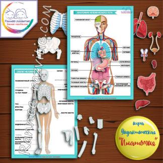 Дидактическая игра «Анатомия»